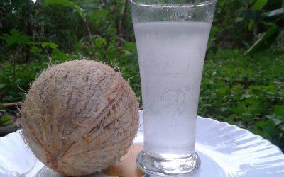 Coconut Juice - Bombay Chil